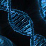 Posiadanie genu otyłości nie jest przeszkodą w skuteczniej walce z kilogramami, mówią naukowcy
