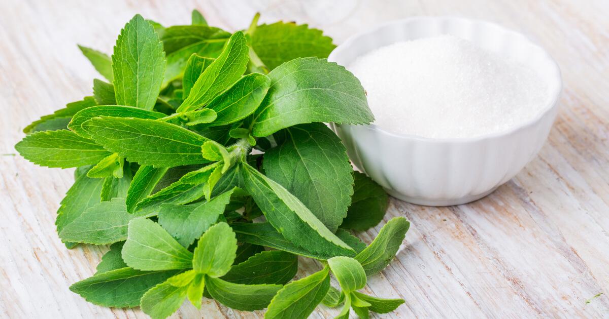 Stevia liście oraz stevia w postaci proszku