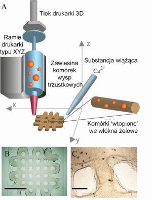 Drukarka 3D wydrukowała lek na cukrzycę
